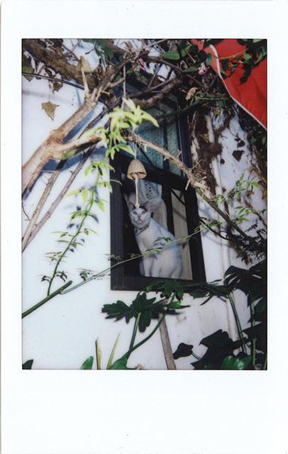 平賀さち枝がチェキを片手に江ノ島さんぽ