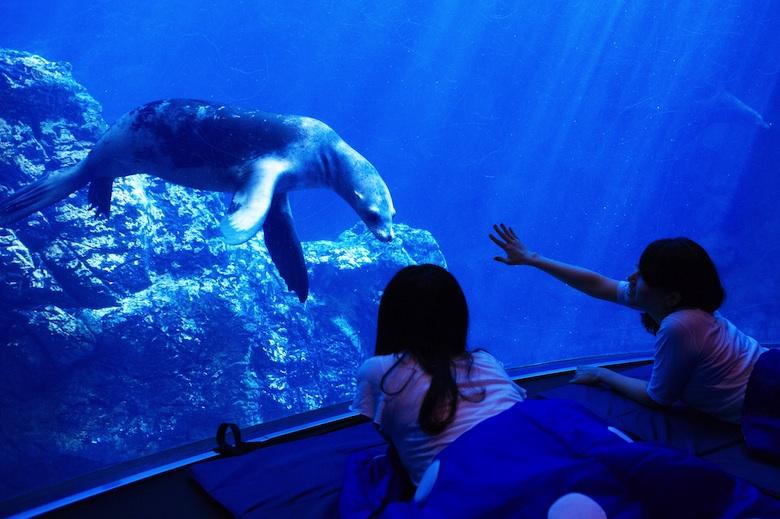 夜の水族館でお泊まり女子会!静かな海の世界を貸し切りで life160223_kaiyukan_1