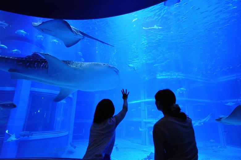 夜の水族館でお泊まり女子会!静かな海の世界を貸し切りで life160223_kaiyukan_2
