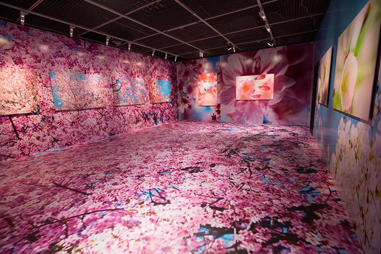 安室奈美恵や綾野剛ら作品も。蜷川実花、自身最大の個展を台湾で開催 art160323_ninamika_4