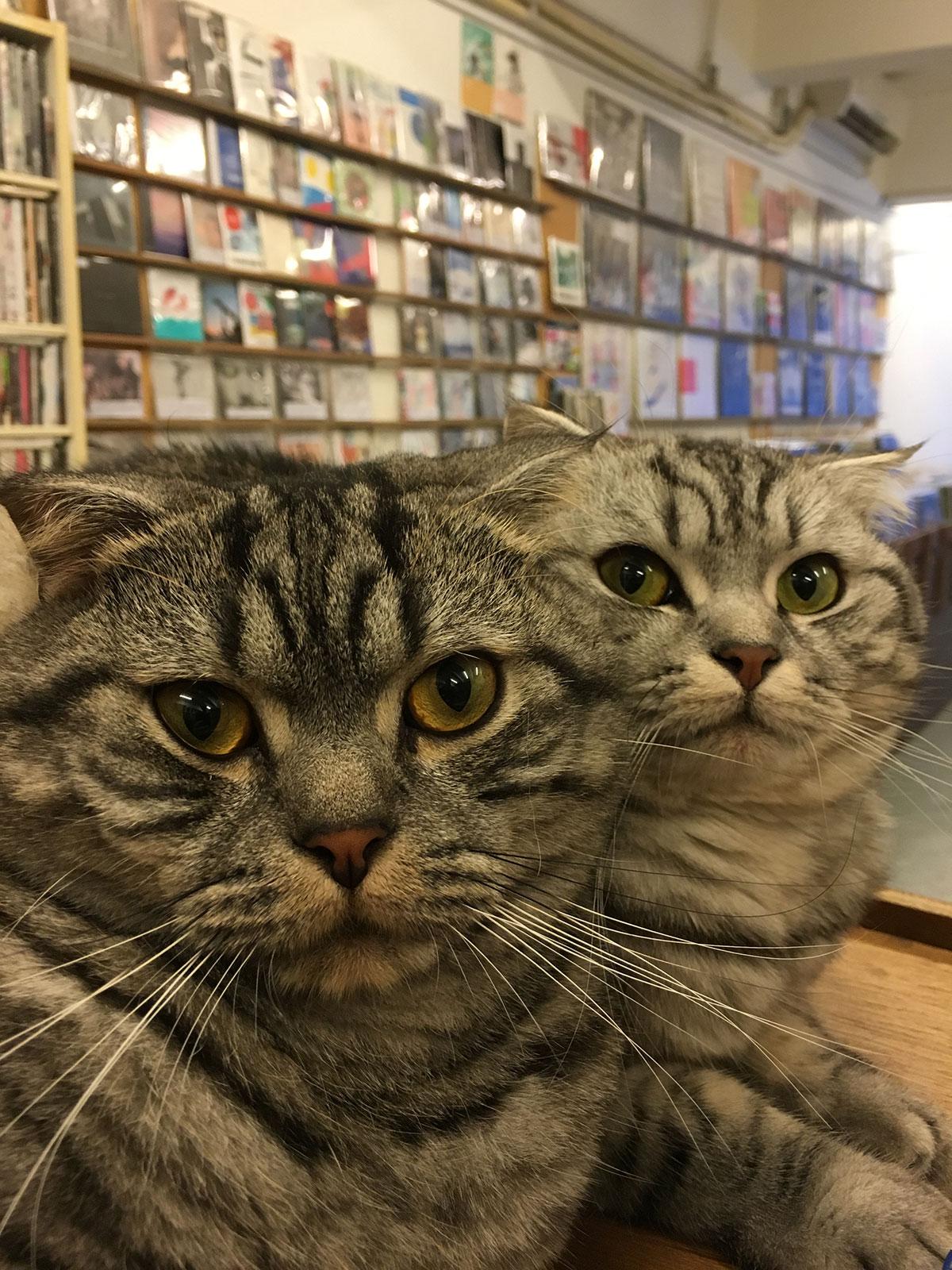"""アジアン・インディー・ミュージックシーン 〜vol.2「香港」with Gary from """"White Noise Records""""〜 Jer-and-Mei"""