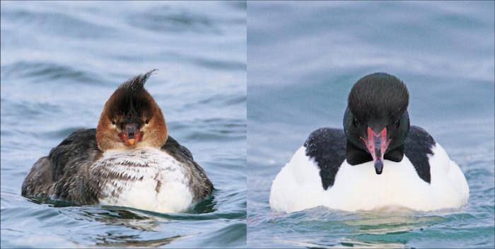 SKE48高柳明音が推薦!鳥の正面顔だけを172種類収録した写真集って? art161201_genkosha_016-700x352