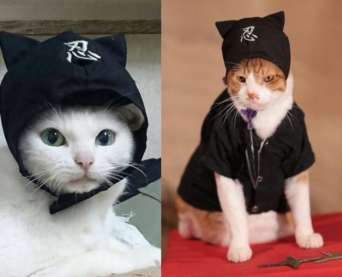 アイドル猫の愛らしい写真公開!『猫侍』スタッフが送る『猫忍』主演・金時の魅力とは? #猫 fi161213_nekonin_1-1-700x567