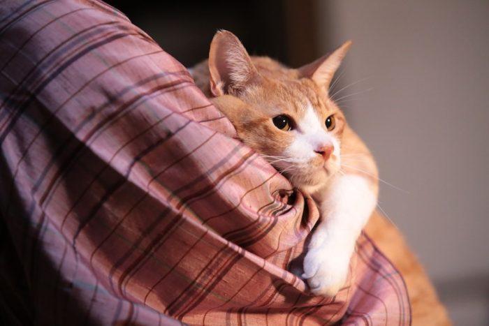 アイドル猫の愛らしい写真公開!『猫侍』スタッフが送る『猫忍』主演・金時の魅力とは? #猫 fi161213_nekonin_36-700x467