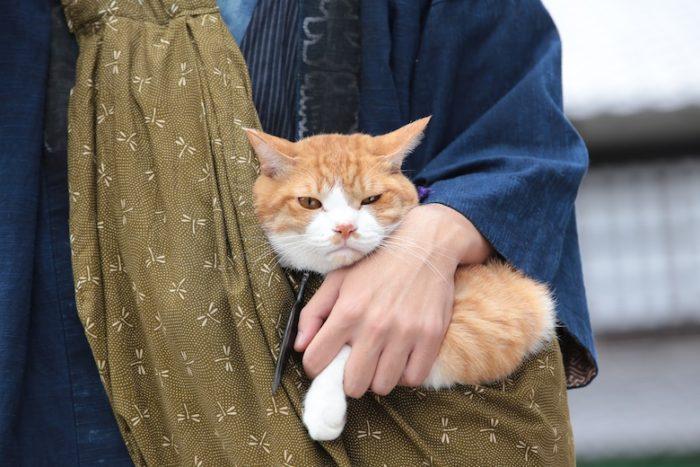 アイドル猫の愛らしい写真公開!『猫侍』スタッフが送る『猫忍』主演・金時の魅力とは? #猫 fi161213_nekonin_8-700x467