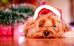洋楽 クリスマスソング