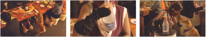"""色っぽい""""くノ一""""岸明日香が魅せるセクシーアクション&犬のかわいすぎる演技!?「柴犬vs忍者 かくれんぼ」動画公開 sub8-1-700x128"""