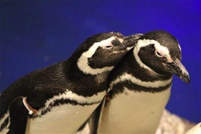 """""""ふわきゅん""""クラゲに癒されよう!蜷川実花コラボ展示にチョコ色クラゲ!?ペンギン×ハンドマッサージも 7e510457dc526ba7d392f9f2058e5358-700x467"""