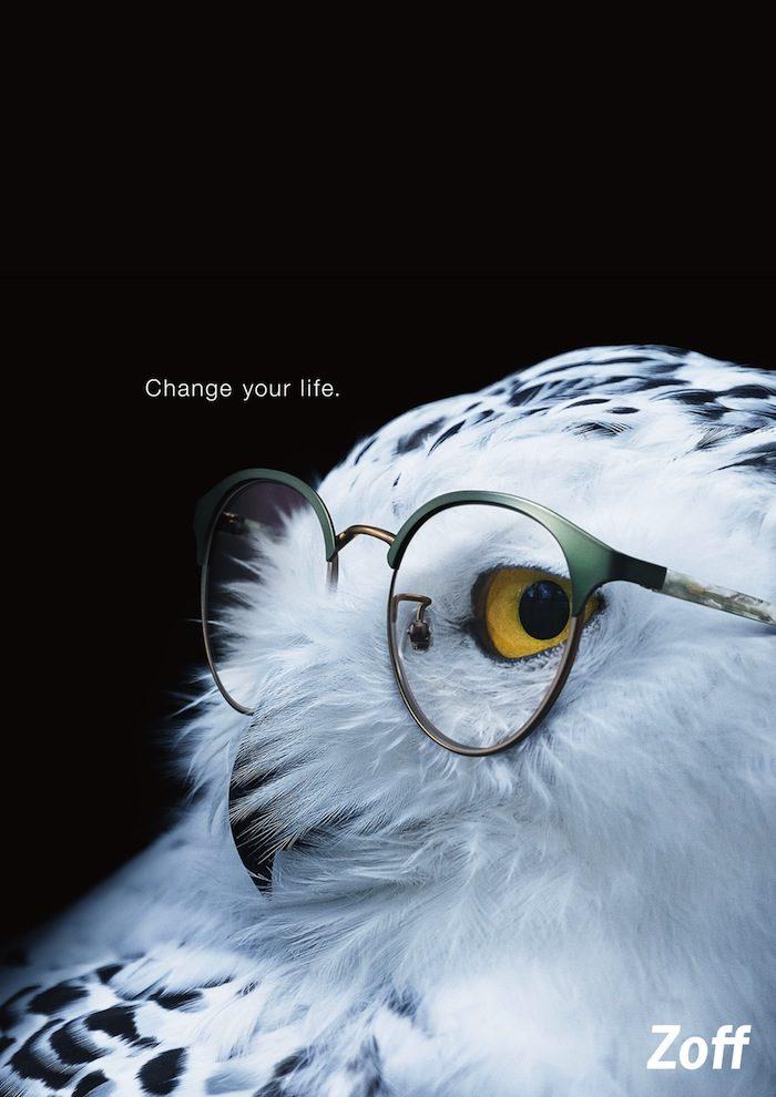 メガネがゴリラの印象も変える!ミーアキャット、チーター、日本ザルにもメガネが必要? Li170318_zoff_2-700x990