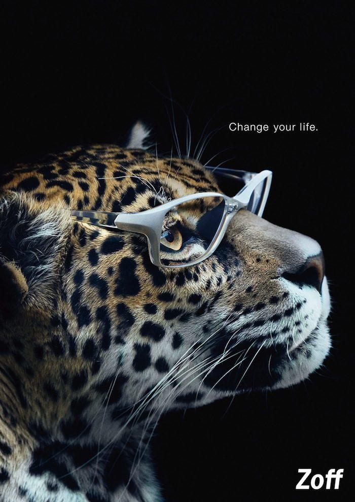メガネがゴリラの印象も変える!ミーアキャット、チーター、日本ザルにもメガネが必要? Li170318_zoff_3-700x989