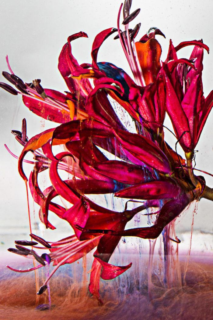 """【インタビュー】朽ちるさまを""""押し花""""で表現——フラワーアーティスト・相壁琢人の「無彩色の痛点」 interview_ahiaikabe_0I2A7803-700x1049"""