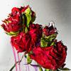 Pressed Flower Exhibition<無彩色の痛点>