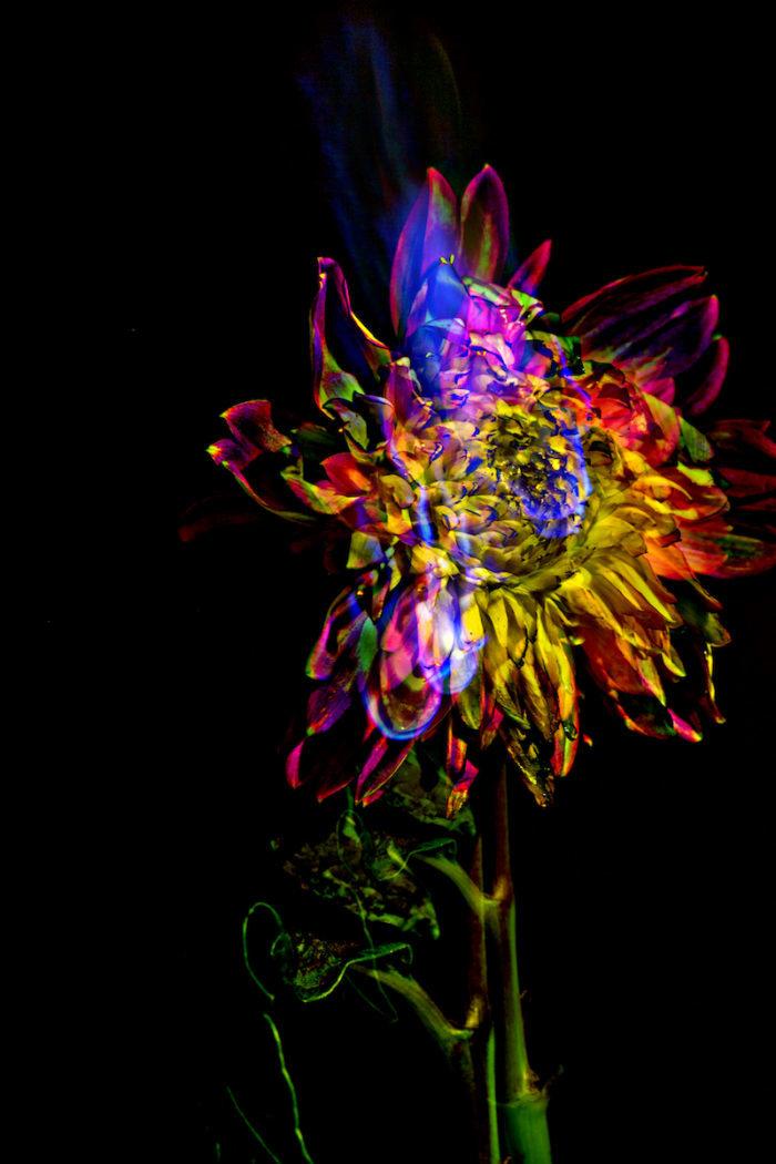 """【インタビュー】朽ちるさまを""""押し花""""で表現——フラワーアーティスト・相壁琢人の「無彩色の痛点」 interview_ahiaikabe_0I2C5805a-700x1050"""