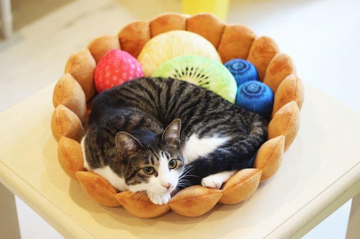 ネコもタルトで丸くなる。ついでにワンちゃんも♡ sub7-2-700x466