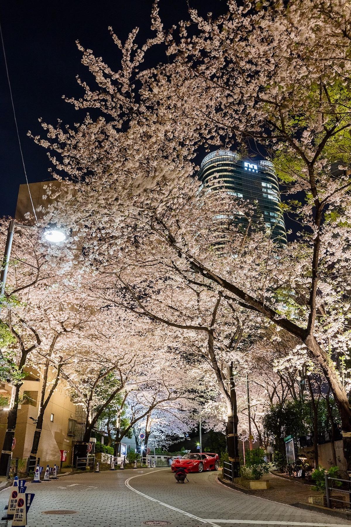 アークヒルズで<さくらまつり 2018>開催!桜のライトアップのほか、グルメ屋台やワークショップなどを楽しもう! gourmet180305_arksakura_03