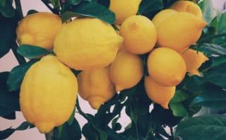 レモンサワーフェスティバル
