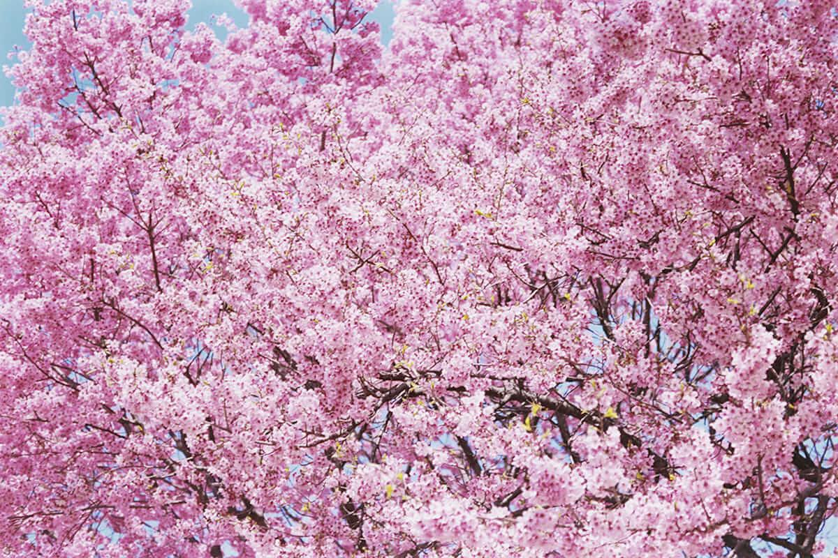 蜷川実花の本質に迫る!9つのテーマまとめた写真集『蜷川実花虚構と現実の間に』。全国各地で蜷川実花展開催! cluture180621_abu_7-1200x800